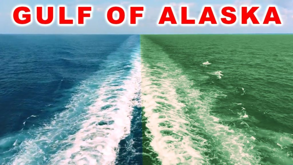 Gulf of alaska : Mysterious Place where two oceans meet underwater